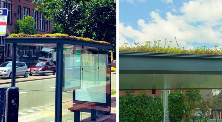 Le fermate dell'autobus vengono trasformate in piccole oasi verdi per le api: l'iniziativa dei Paesi Bassi