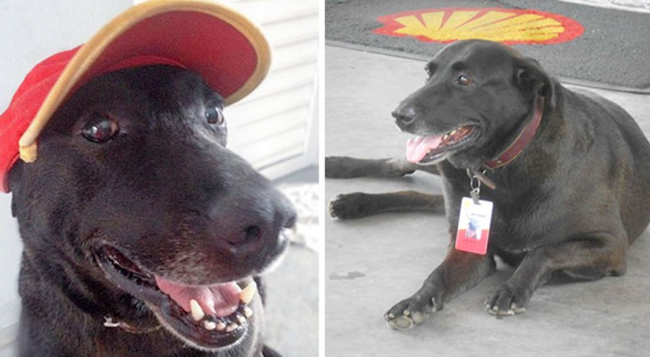 An abandoned dog is adopted by a gas station and
