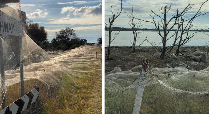 """L'Australia è invasa da milioni di ragni e le ragnatele ricoprono tutto: """"è un'Apocalisse"""""""