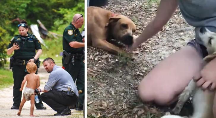 Niño autista desaparecido es encontrado en el bosque sano y salvo: sus perros lo habían protegido