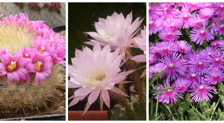 Décorez la maison avec ces plantes grasses aux fleurs magnifiques et parfumées