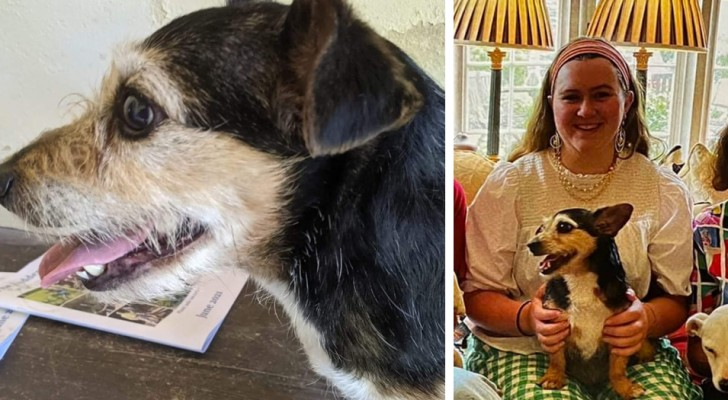 A woman miraculously finds the little dog that had disappeared from her garden 10 years earlier