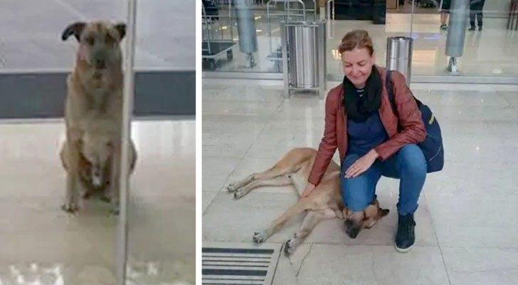 A stray dog becomes attached to a flight attendant and waits for her every day at the hotel door