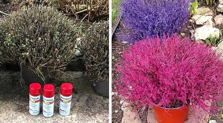 Spuitverf op verdroogde planten: de nieuwe