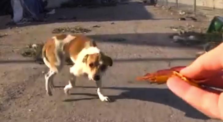 Dopo un incidente, questo cane viveva nella spazzatura. Ecco come è ORA.