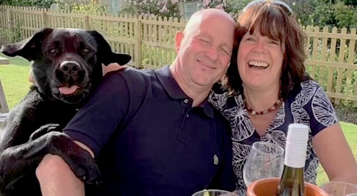 Labrador invade a foto de seus pais humanos e provoca gargalhadas em todo o pub