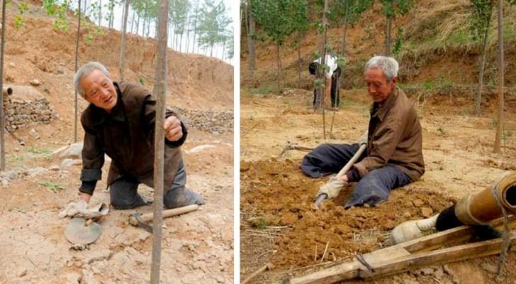 Idoso com deficiência planta árvores há quase 20 anos: agora ele tem uma verdadeira floresta