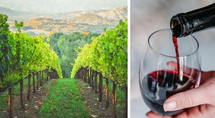 Una cantina cerca persone che bevano vino: lo stipendio è di $10.000 al mese