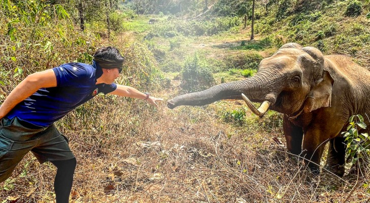 A veterinarian meets the elephant he saved 12 years earlier: We recognized each other and said goodbye