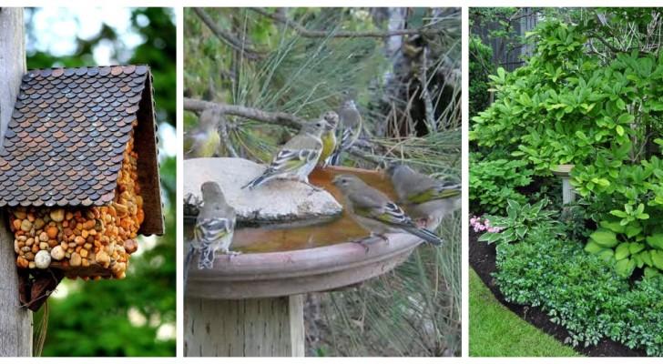 Vuoi ospitare tanti uccellini in giardino? Scopri come renderlo super accogliente per loro