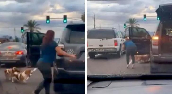 Vrouw houdt het verkeer tegen en redt drie honden die de weg overstaken: niemand was gestopt om hen te helpen