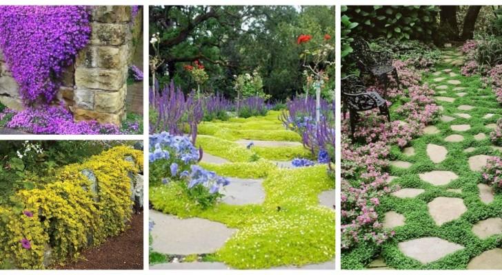 Créez des tapis verts, fleuris et spectaculaires dans le jardin en utilisant les plantes couvre-sol