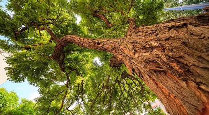 Un seul arbre suffit à rafraîchir une rue de ville la nuit : une recherche le démontre