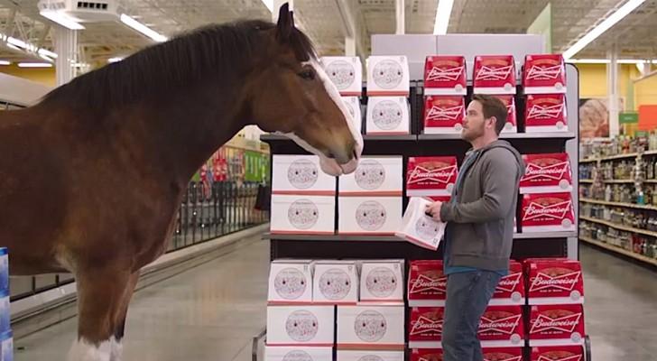 Deze man koopt bier als hij plotseling oog in oog komt te staan met een... paard!