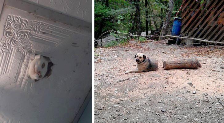 15 mascotas que hicieron asustar a sus dueños sin hacerlo a propósito