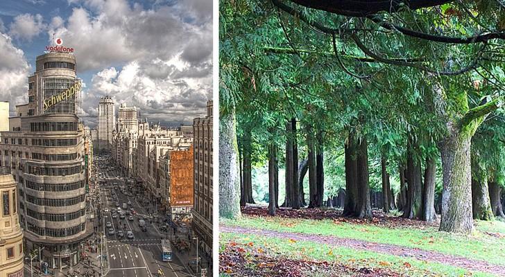 Madrid wird einen riesigen städtischen Wald pflanzen: 75 km Bäume sollen die Luft reinigen und die Temperaturen senken