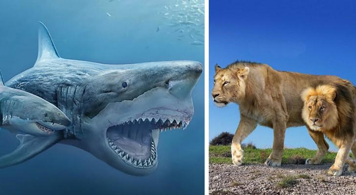 15 photos fascinantes nous montrent les animaux d'aujourd'hui en comparaison avec leurs ancêtres préhistoriques