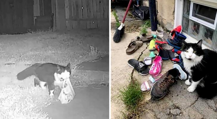 Un chat aime voler les chaussures de tous ses voisins : sa maîtresse s'en aperçoit et ouvre un groupe Facebook pour les restituer