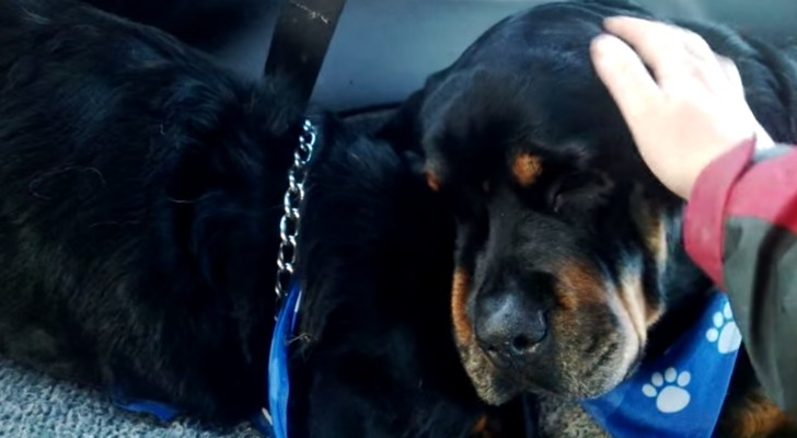 A dog dies during the night: the reaction of his brother leaves you speechless.