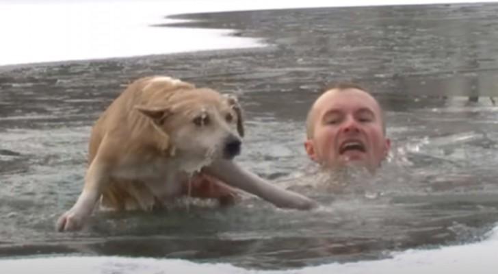 Hond valt in een wak maar wordt gered door een journalist die in het ijskoude water duikt