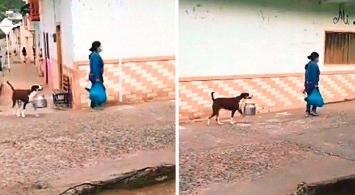 Cute little dog helps his mistress with the shopping by carrying a pot between her teeth
