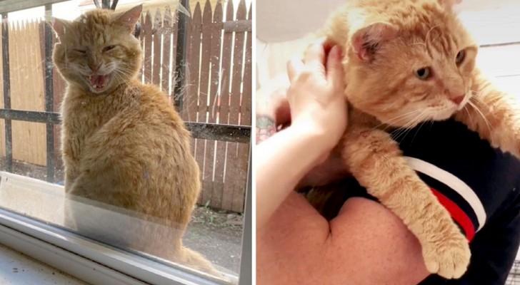 Un chat errant se présente tous les jours devant la fenêtre d'une fille et demande la permission d'entrer