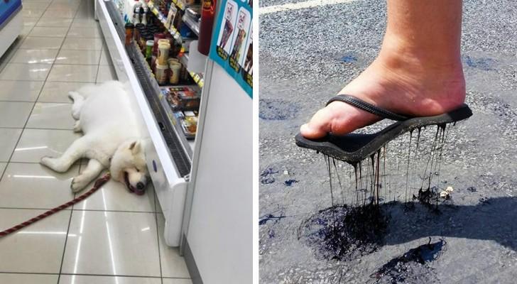 16 foto ci mostrano le conseguenze del caldo estremo sulla nostra vita quotidiana