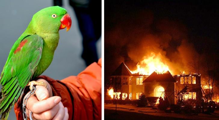 El loro despierta a su dueño en el corazón de la noche y lo salva de la casa que se estaba incendiando