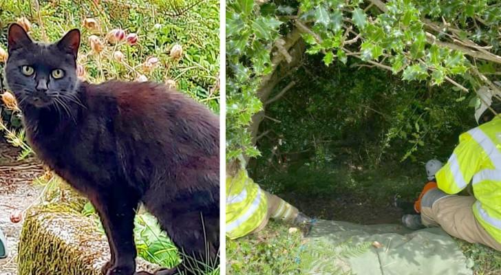 Un chat sauve la vie de sa maîtresse tombée dans un ravin en miaulant pour attirer l'attention