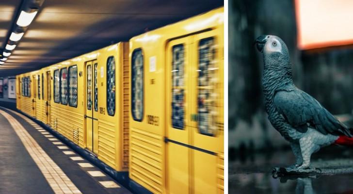 Ein verirrter Papagei wird am Bahnhof gefunden und kündigt ständig die Ankunft der U-Bahn an