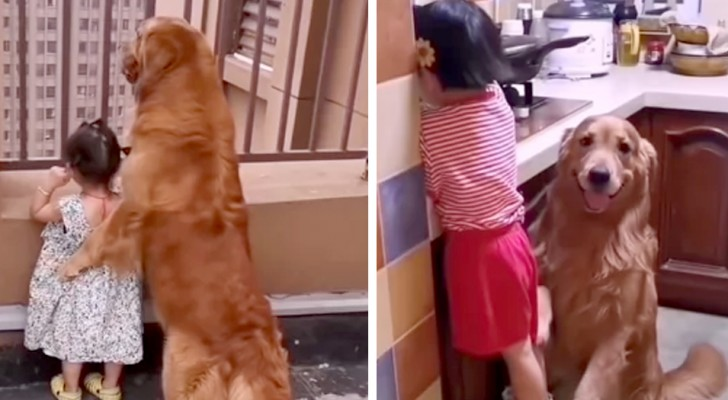Ein knuddeliger Golden Retriever kümmert sich um die Tochter seines Besitzers, als wäre sie sein Babysitter