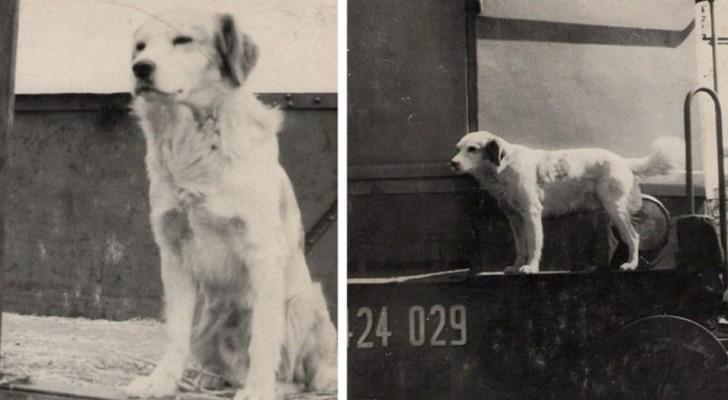 Este perro aprendió a viajar en tren solo para poder volver a encontrar a su amigo humano