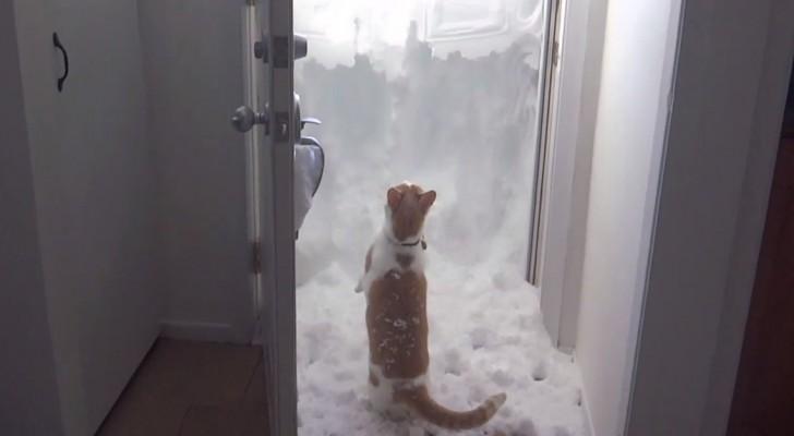 Vastberaden om eruit te komen, maar er ligt teveel sneeuw: uiteindelijk vind ze haar weg!