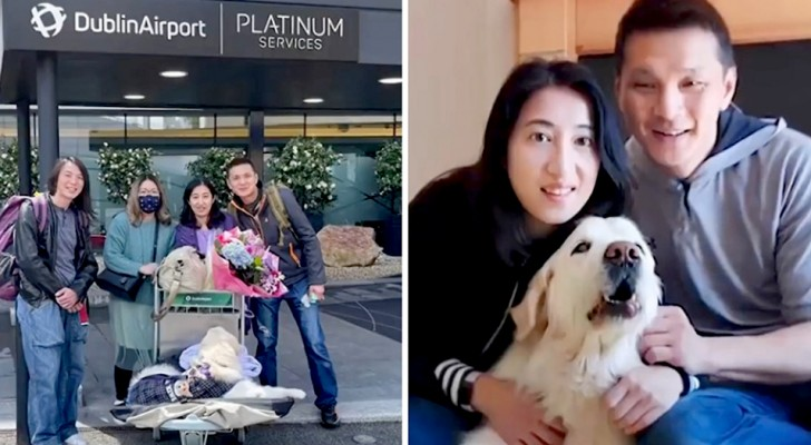 Una donna paga 33 mila dollari per viaggiare in un aereo privato insieme al suo cane malato