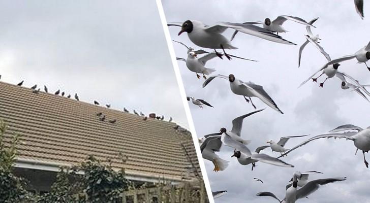 Donna multata di 3000£ per aver dato da mangiare agli uccelli: aveva reso la sua strada