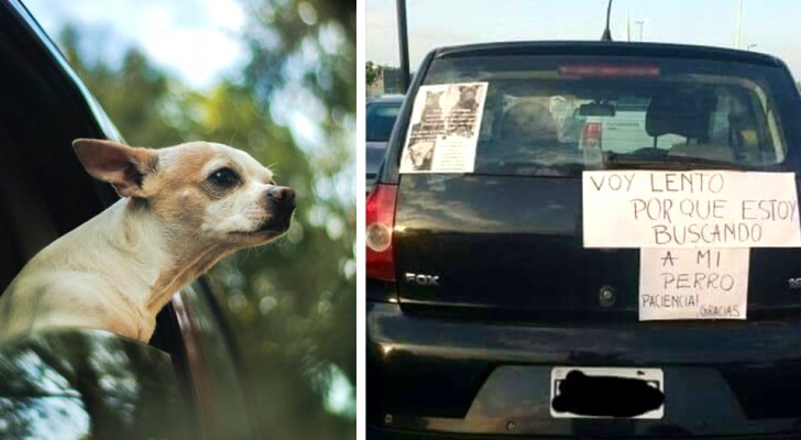 Ele perdeu seu amigo de quatro patas e escreveu uma placa em seu carro: