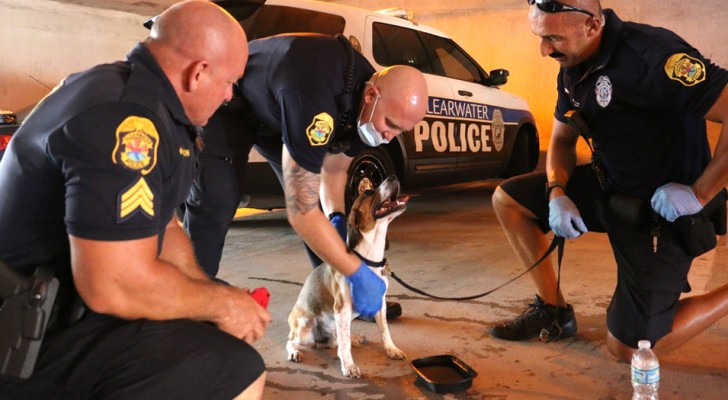 Three policemen notice a dog abandoned in a hot car: they remove the door to save it