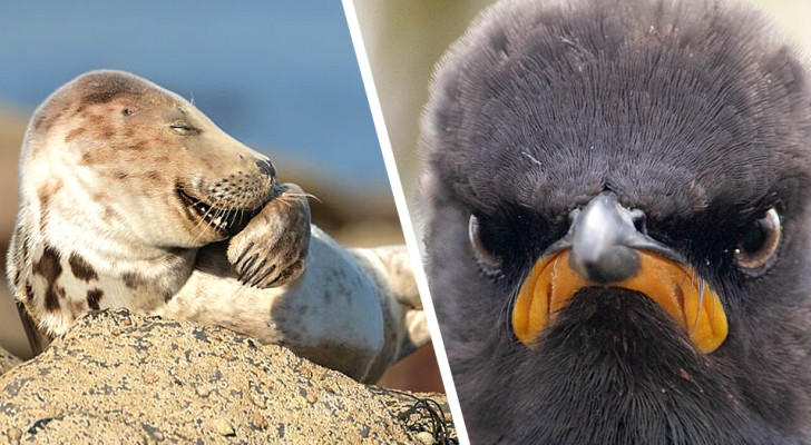 Le côté le plus hilarant de la nature ? Ces 15 photos finalistes des Comedy Wildlife Awards en sont la preuve