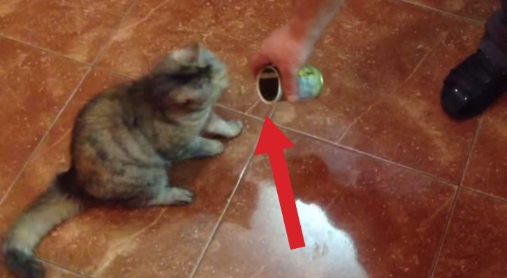 Ecco come reagisce di solito un gatto di fronte a una lattina di olive. Lo sapevate?
