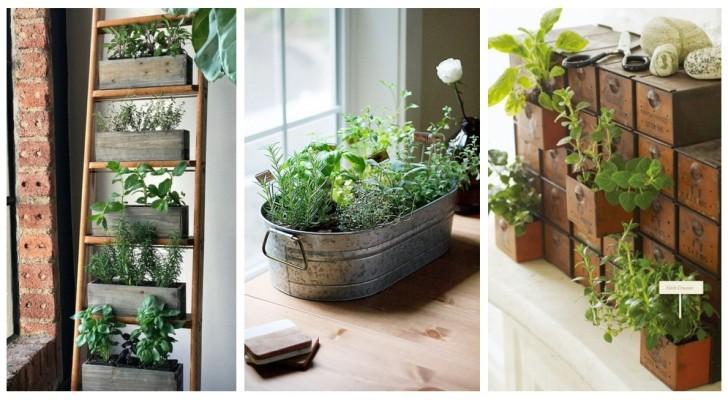 Belles, bonnes et parfumées: utilisez les plantes aromatiques pour décorer la maison et découvrez comment les avoir toujours fraîches