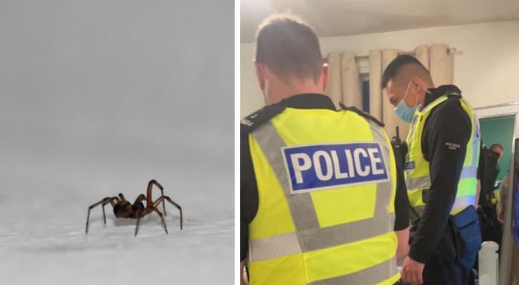 Ragazza vede un ragno in casa e urla così forte che i vicini chiamano la polizia