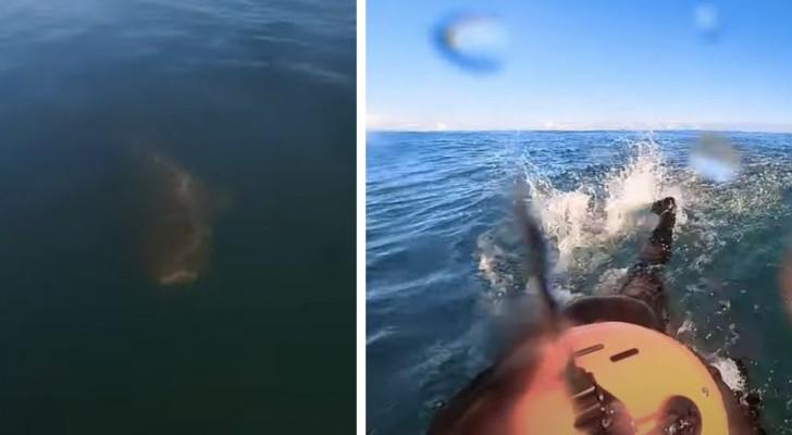 Surfista viene inseguito da uno squalo e scappa: il filmato è da brividi