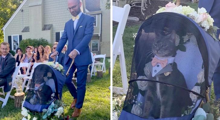 En katt bär vigselringarna till altaret i eleganta kläder - resultatet är riktigt roligt