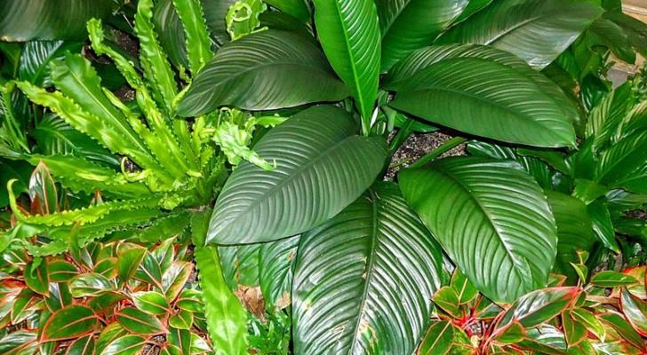 Préparez un produit pour les feuilles qui n'abîme pas les plantes en utilisant des ingrédients du quotidien
