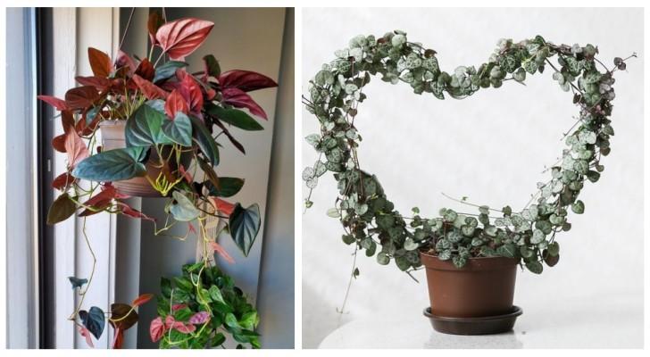 Aggiungi un tocco di verde in casa decorando gli interni con bellissime piante rampicanti