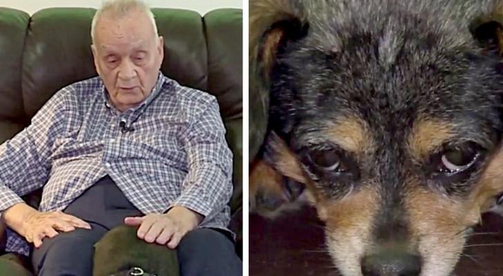 Hond vindt een blinde man die op de grond is gevallen: dankzij haar geblaf heeft ze zijn leven gered
