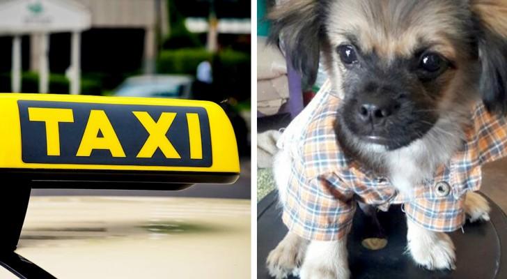 Encuentra a su perro después de haberlo perdido en el mercado: había vuelto solo a bordo de un taxi