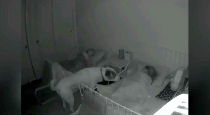 Questo cane controlla ogni notte che i suoi padroncini si siano addormentati: una
