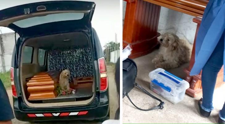 Cagnolino si rifiuta di abbandonare la bara della padrona il giorno del suo funerale