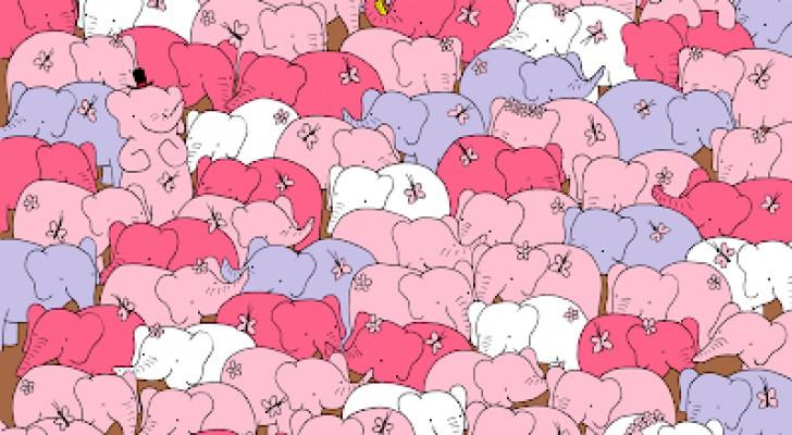 Er zijn niet alleen olifanten: zie je het hart verborgen op deze foto?